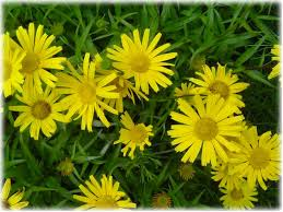Jenny Sprung Treat Yourself Naturally Pain Relief, Arnica, Rest, Ice, Compression, Home Treatment for Pain Relief