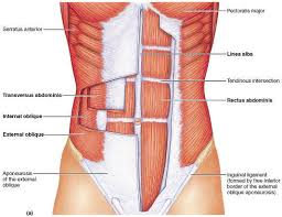 The superficial abdominals can be released by these simple home treatment therapies