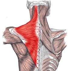 reduce and alleviate neck pain trapezius