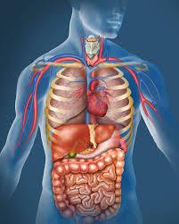 Vital Organ Massage can reduce body pain, visceral massage, self visceral massage